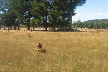 Pet Friendly Toscaz-The Big Dog Run