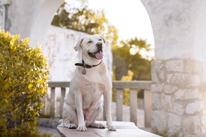 Pet Friendly Alessandra Sawick Photography