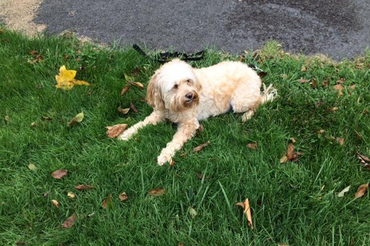 Pet Friendly Snaggle Foot Dog Walks & Pet Sitting