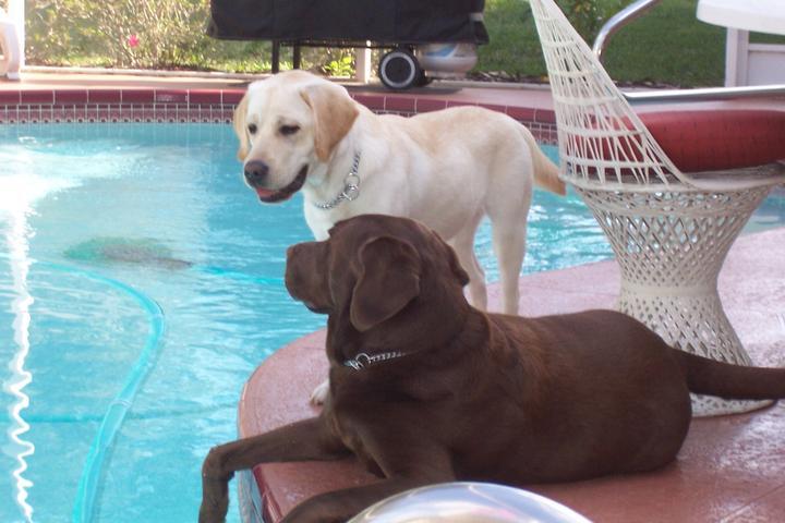 Pet Friendly Dot for Spot-Professional Pet Sitter