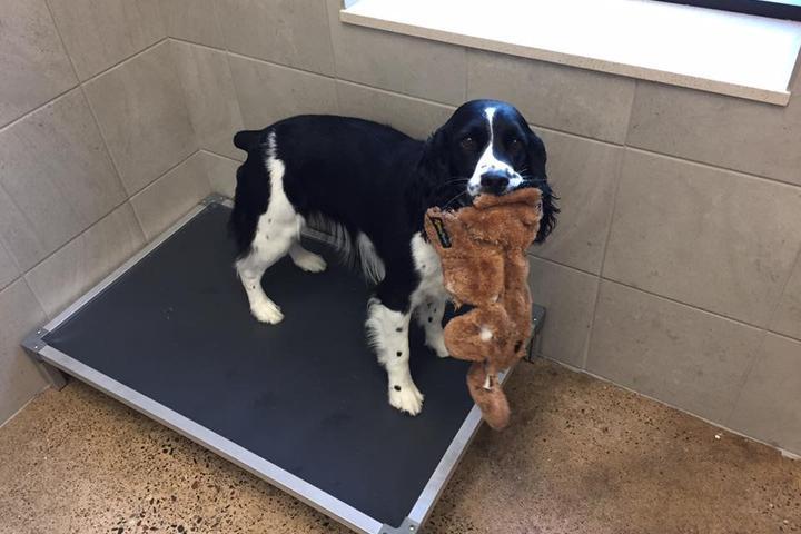 Pet Friendly Fusion Pet Retreat