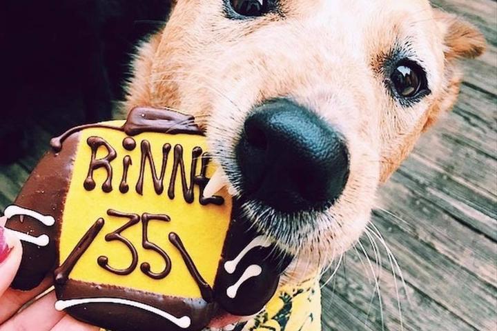 Pet Friendly Three Dog Bakery – Nashville