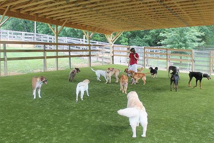 Pet Friendly Wagsworth Manor Pet Resort