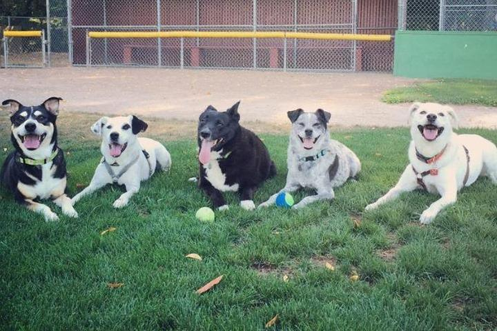 Pet Friendly Lily's Legacy Senior Dog Sanctuary