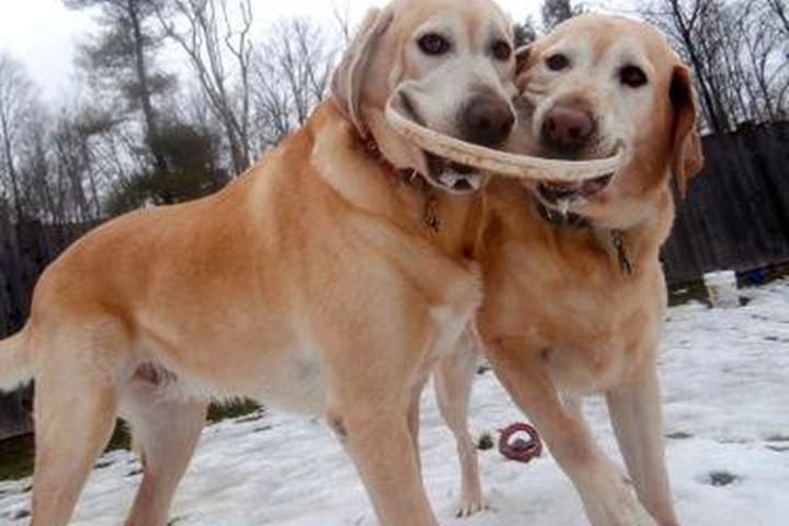 Pet Friendly Dog Mountain Lodge