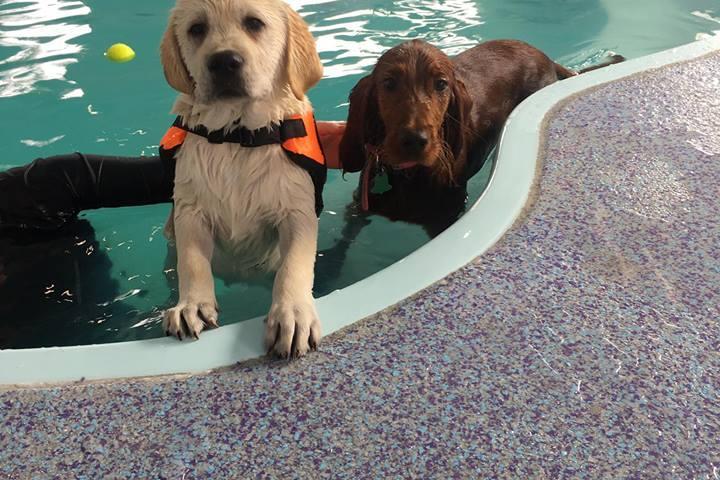 Pet Friendly Bubble Puppy Poolhouse