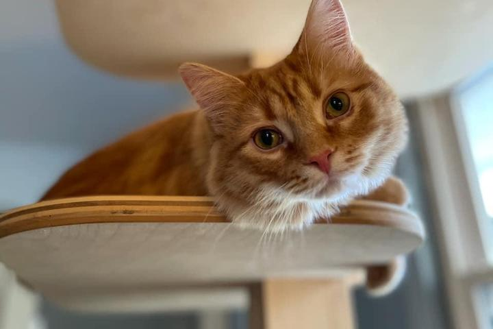 Pet Friendly Contented Cats