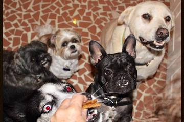 Pet Friendly Happy Dog Personalized Pet Sitting Service