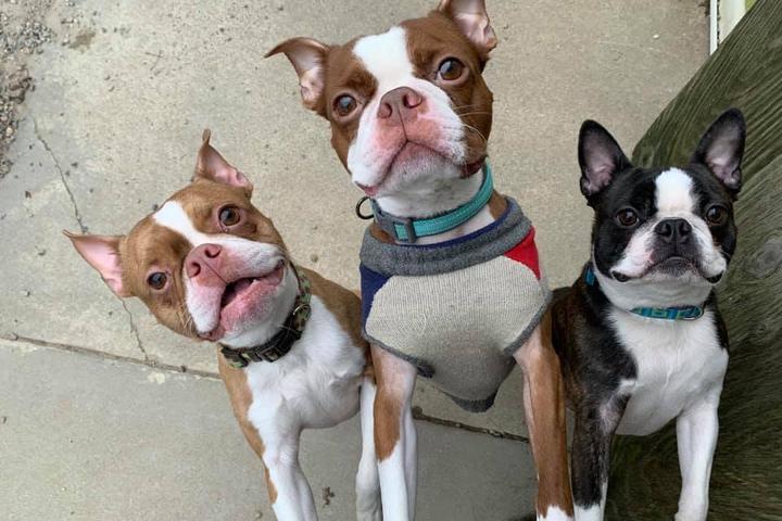 Pet Friendly Tippin Rock Pet Lodge