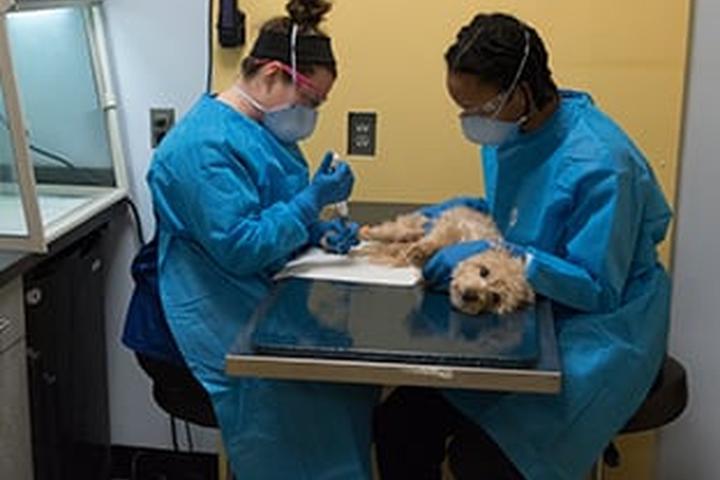 Pet Friendly Atlantic Veterinary Internal Medicine & Oncology