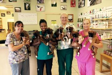 Pet Friendly Bayshore Animal Hospital