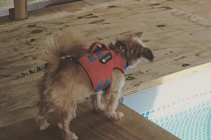 Pet Friendly Dog Paddle