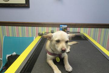 Pet Friendly Meadowlawn Animal Services - Market Commons