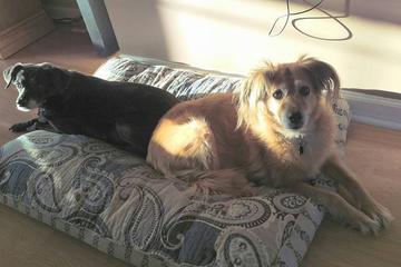 Pet Friendly Lazy Day Pet Services