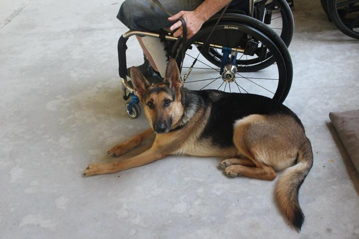 Pet Friendly Unleashed Dog Training