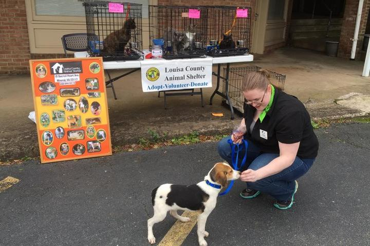 Pet Friendly Louisa County Animal Shelter