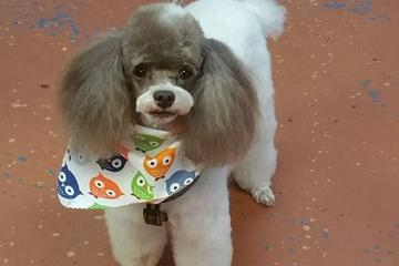 Pet Friendly Poodle Boutique & Grooming