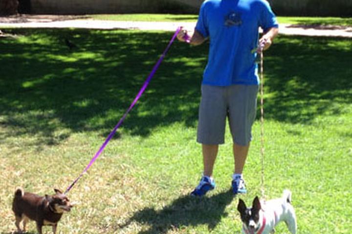 Pet Friendly  Dog Walking South Bay