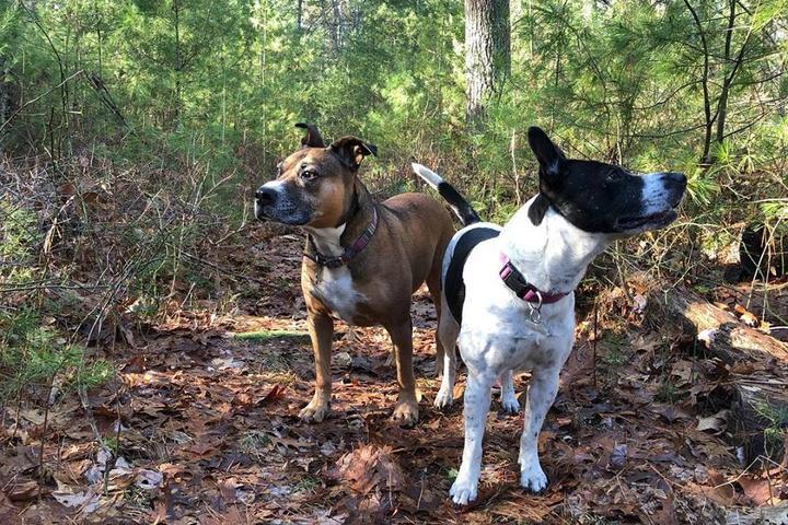 Pet Friendly Beacon Petsitting, Dogwalking, and Doggie Daycare