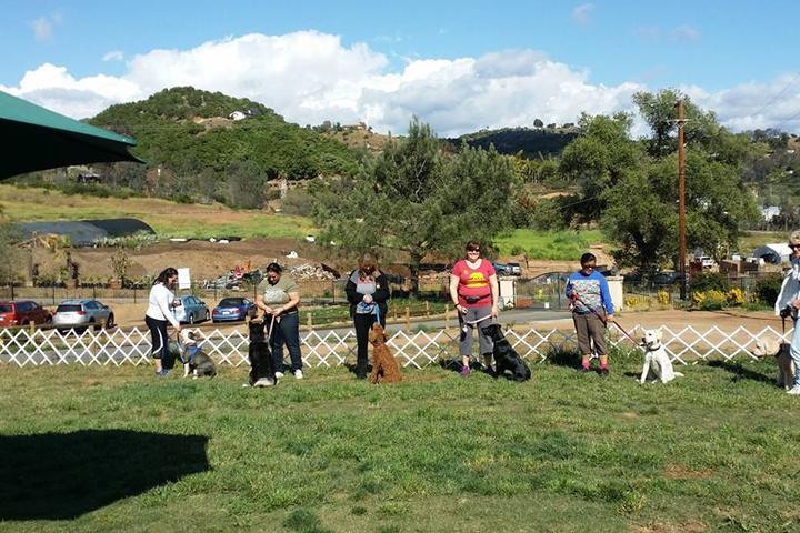 Pet Friendly North County Dog Training