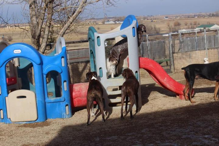 Pet Friendly Happy Tails Dog Ranch