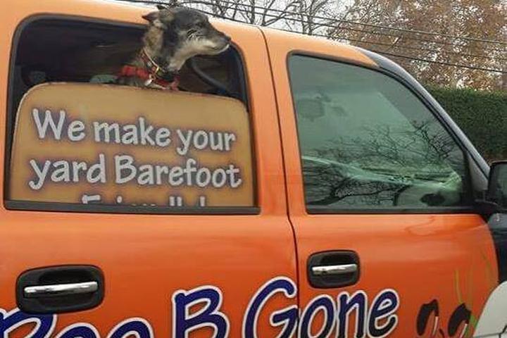 Pet Friendly Poo B Gone