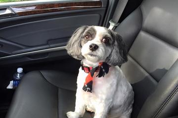 Pet Friendly Topknots Pet Grooming