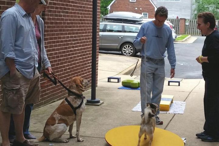 Pet Friendly Wholistic Hound Academy