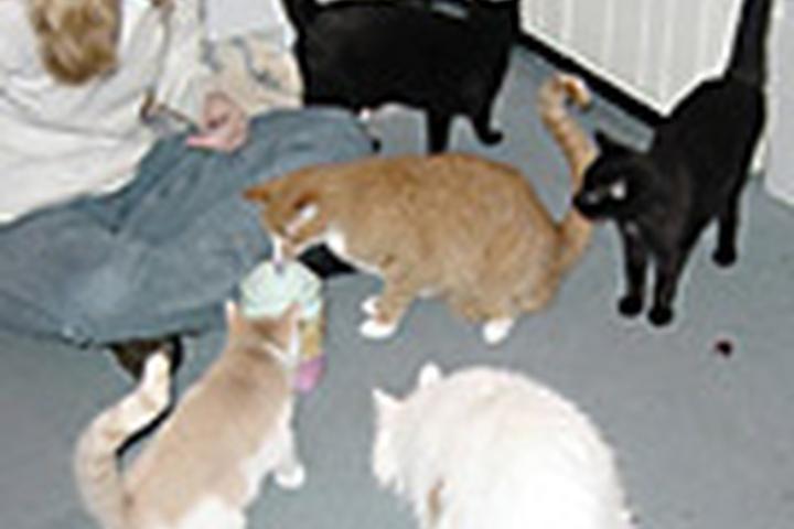 Pet Friendly Top Quality Pet Sitting, LLC