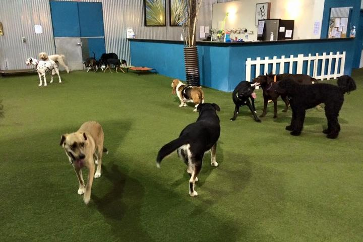 Pet Friendly Fido's Indoor Dog Park