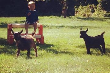 Pet Friendly Animals' Smile Compassionate Training