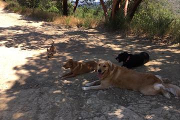 Pet Friendly Ruff 'N Ready Little Doggie Daycare