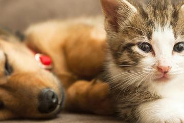 Pet Friendly Homely Petz - Dubai