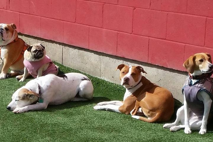 Pet Friendly Camp Canine, Inc.