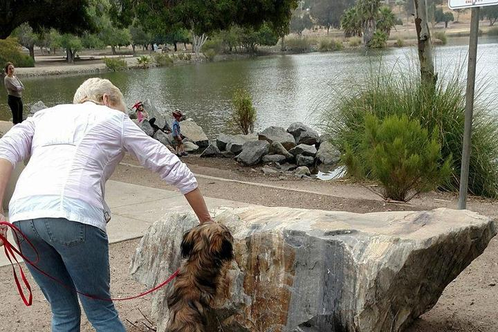 Pet Friendly Cape-Able Canines