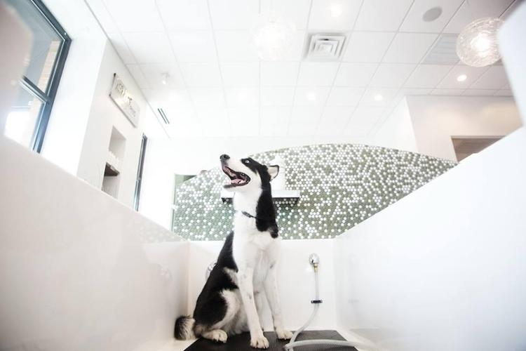 Pet Friendly Bubbly Paws Dog Wash