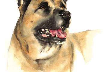 Pet Friendly Susi B. Davis Watercolors