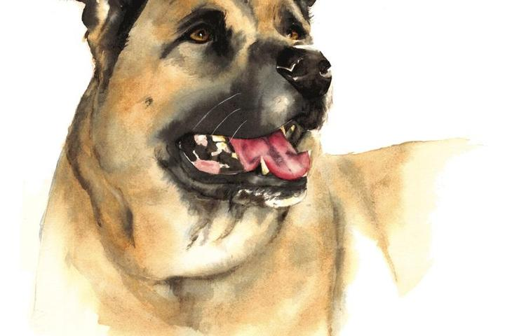 Pet Friendly Susi B. Davis Watercolors
