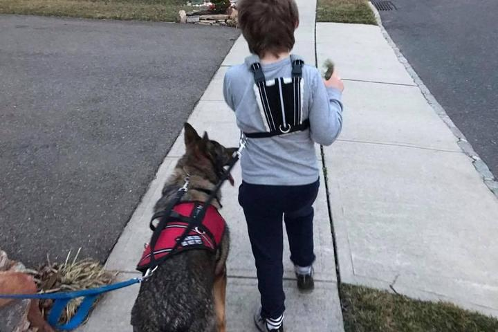 Pet Friendly Hanlon's K9 Dog Training Academy