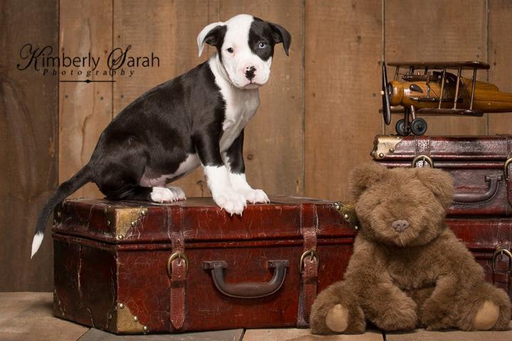 Pet Friendly Kimberly Sarah Photography