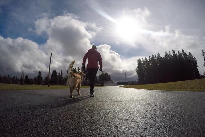 Pet Friendly Run Those Dogs