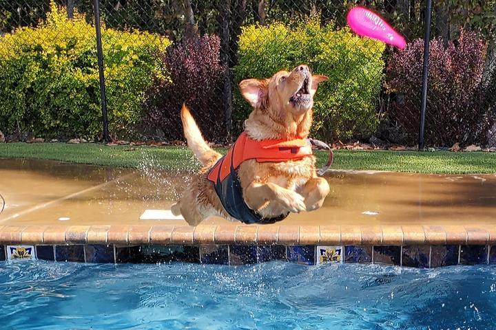 Pet Friendly Bubbles & Bows Tropical Pet Resort & Spa Inc.