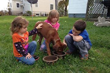 Pet Friendly Dayton Dog Trainer