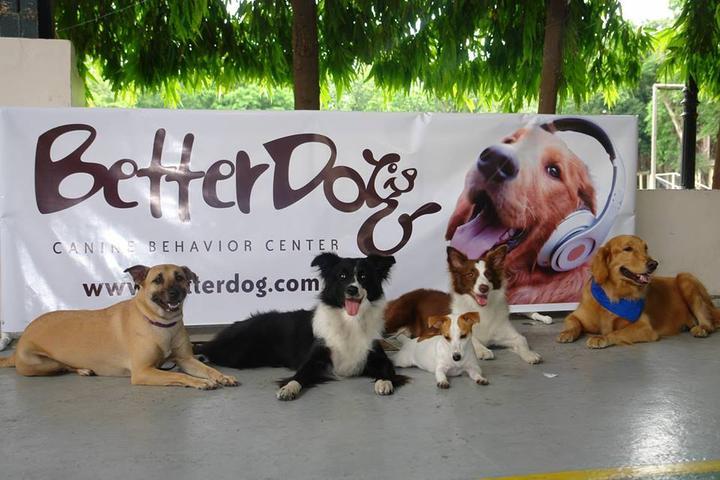 Pet Friendly Better Dog Canine Behavior Center