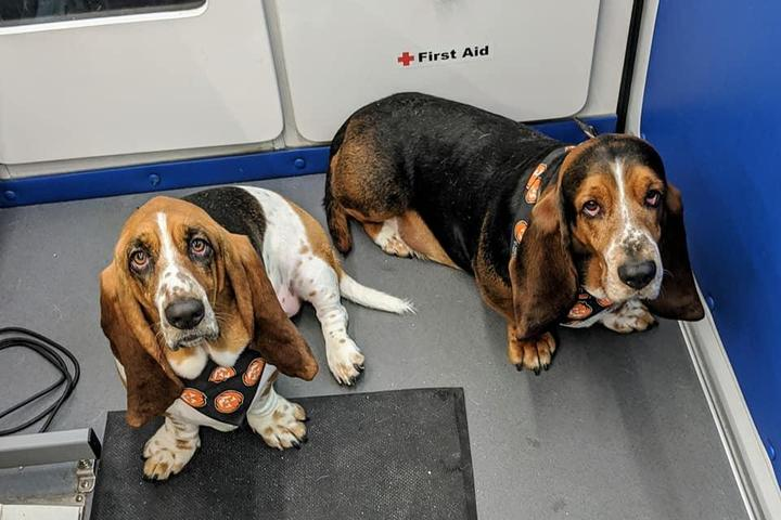 Pet Friendly The Pooch Waggin' Mobile Dog Grooming
