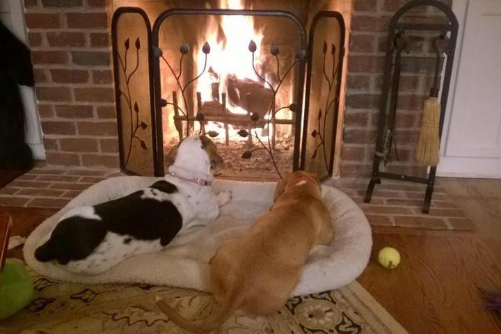 Pet Friendly Suzie's Furry Friendz Pet Care