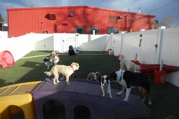 Directory Of Doggie Daycare Boarding In Castle Rock Co Bringfido