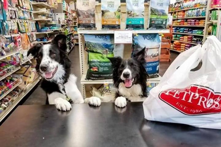 Pet Friendly Pet Pros Lakeland Town Center
