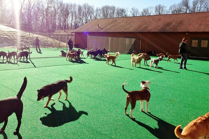 Pet Friendly Candlewick Kennels Pet Resort