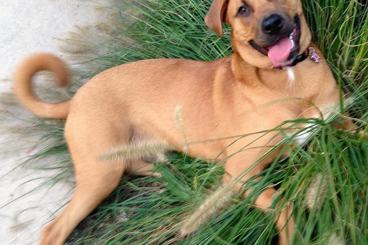 Pet Friendly Hoofin and Woofin LLC